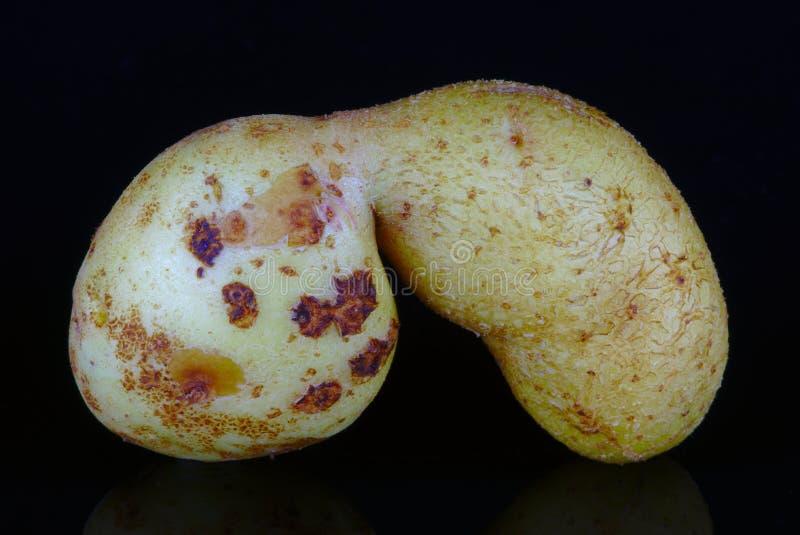 Vervormde biologische aardappel stock afbeelding