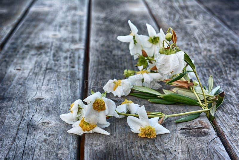 Verwelkende Bloemen stock afbeeldingen