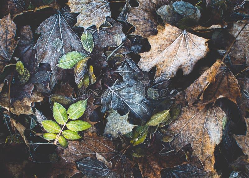 Verwelkte Blätter lizenzfreie stockfotografie