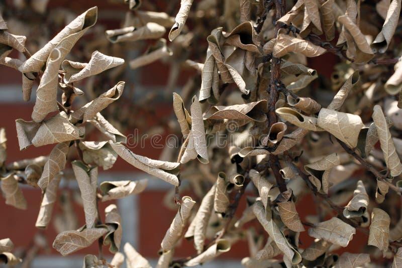 Verwelkte Blätter stockbild