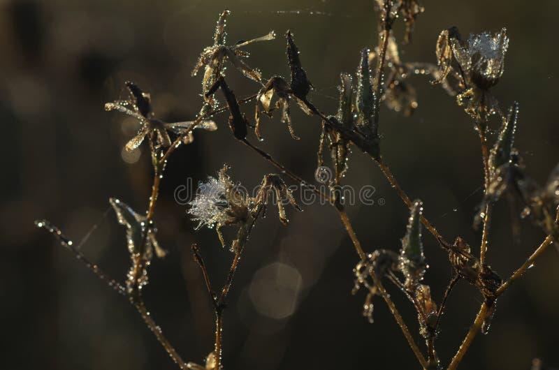 Verwelkte bloem in de ochtend - het detail van de de herfstaard stock fotografie