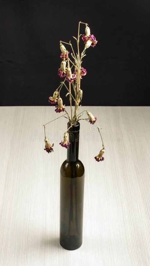 Verwelkte Gartennelkenblumen auf dem grauen Holztisch stockbilder