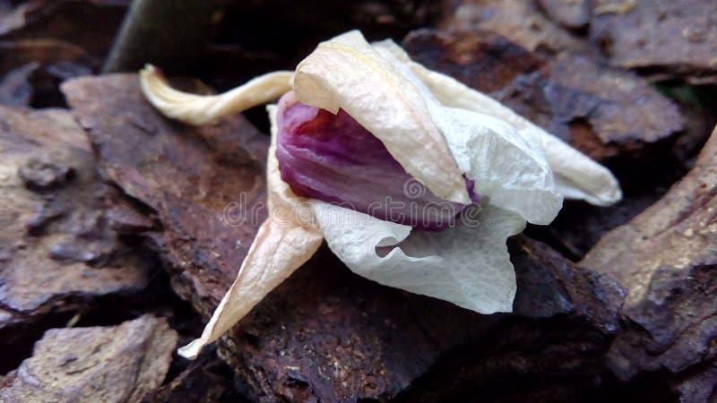 Verwelkte Orchideenblume liegt auf einer Baumrinde lizenzfreies stockbild