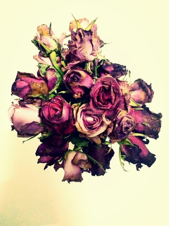 Verwelkte Rosen starben Blume lizenzfreie stockfotos