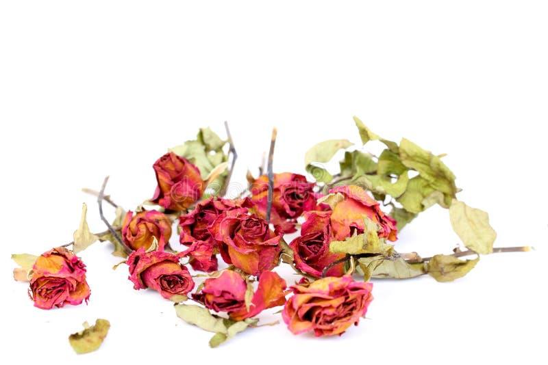 Verwelkte Rosen und Blumenblätter zerstreuten auf weißen Hintergrund stockbilder