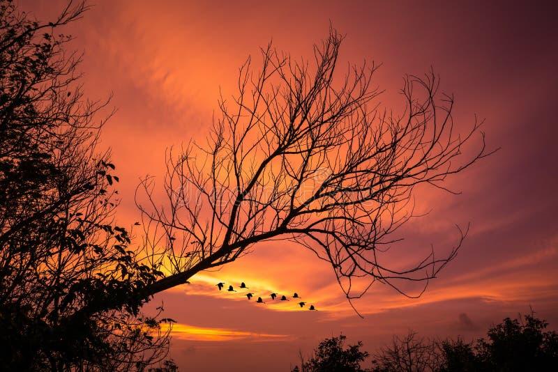 Verwelkter Baum mit Abendrot lizenzfreie stockbilder