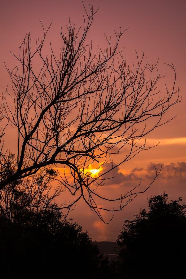 Verwelkter Baum mit Abendrot stockfoto