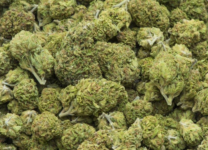 Verwerkte medische marihuana stock foto