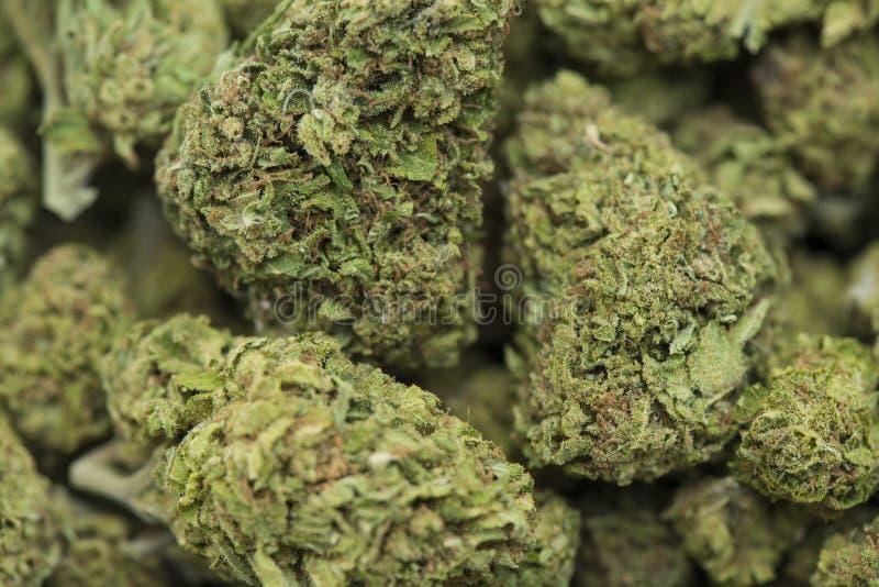 Verwerkte medische marihuana stock afbeeldingen