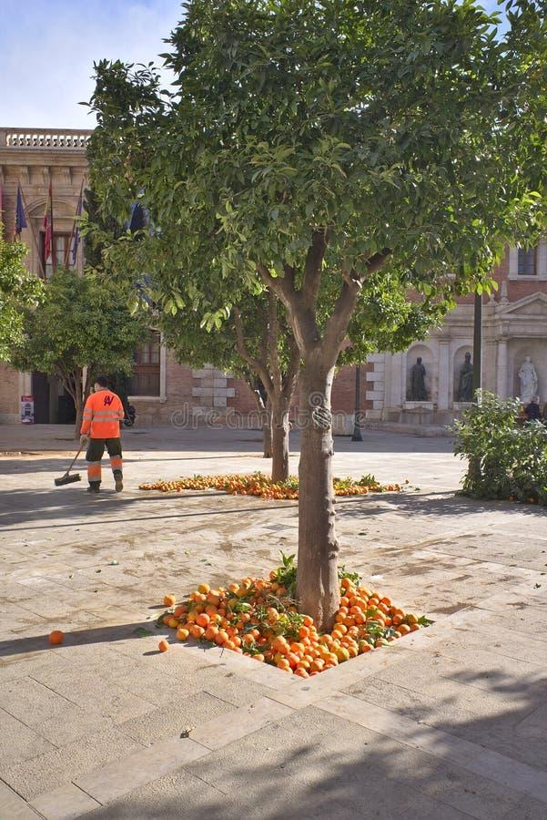 Verwijderend de sinaasappelen die in de parken van Valencia groeien royalty-vrije stock foto