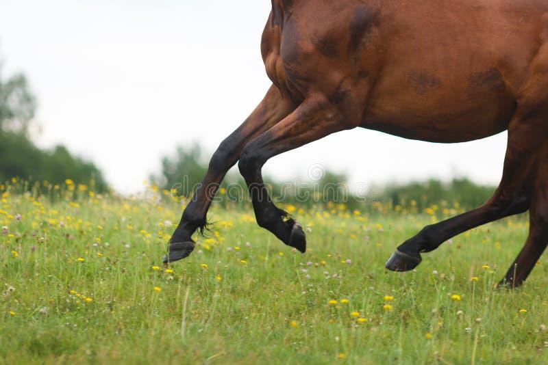 Verwilderungspferd lizenzfreie stockbilder
