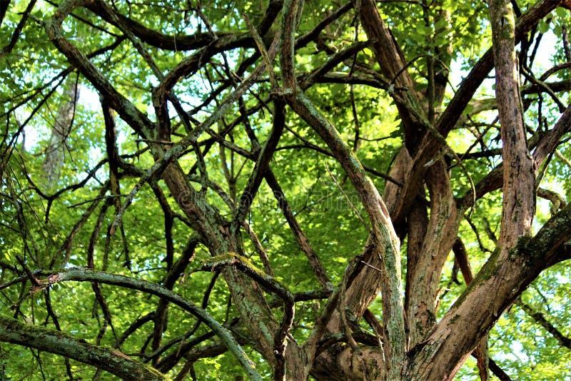Verwirrter Baum lizenzfreies stockfoto