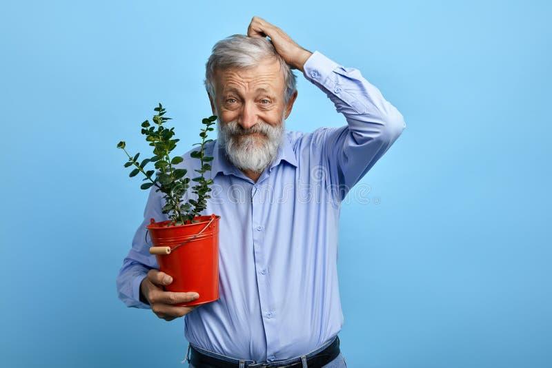 Verwirrter lustiger alter Mann, der sein Haar bei der Aufstellung zur Kamera verkratzt stockbilder