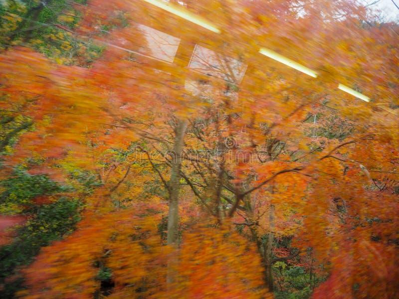 Verwischt von den bunten Ahornbäumen stockfoto