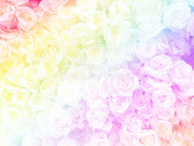 Verwischt von den süßen Rosen in der Regenbogenfarbart auf weicher Unschärfe bokeh Beschaffenheit für Hintergrund lizenzfreie stockbilder