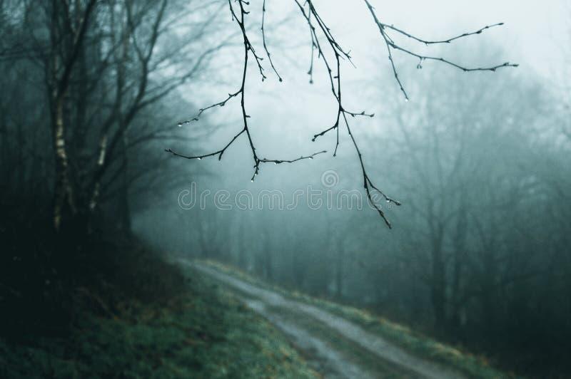 A verwischte aus Fokuswaldweg an einem kalten, nebeligen Wintertag mit den Zweigen nah herauf und in Fokus heraus stockfoto