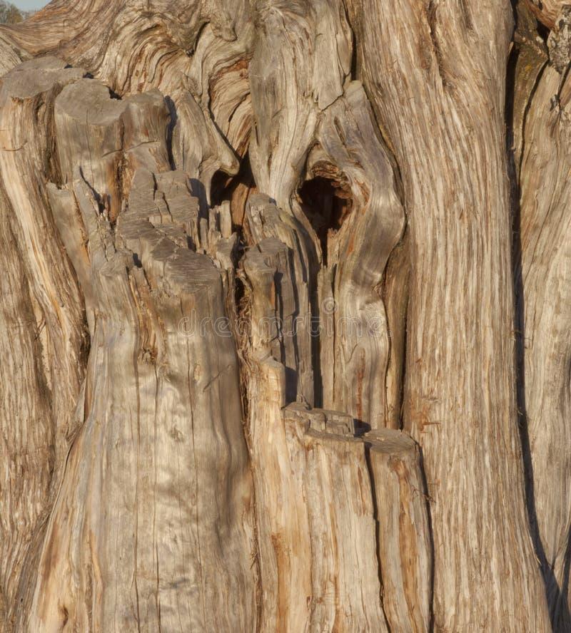 Verwitterter Baum, Manassas nationales Schlachtfeld, VA lizenzfreies stockfoto