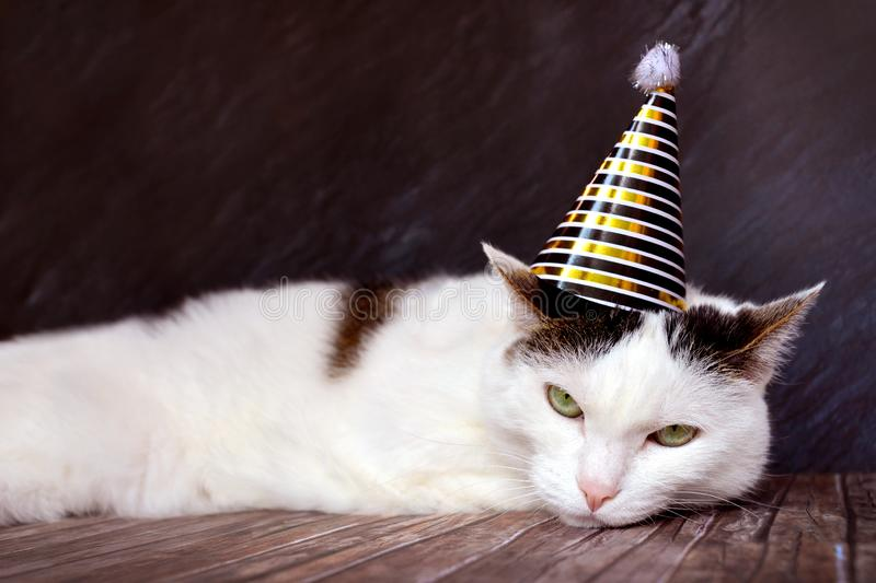 Very angry looking tabby cat wearing a golden birthday or silvester party hat on head stock image