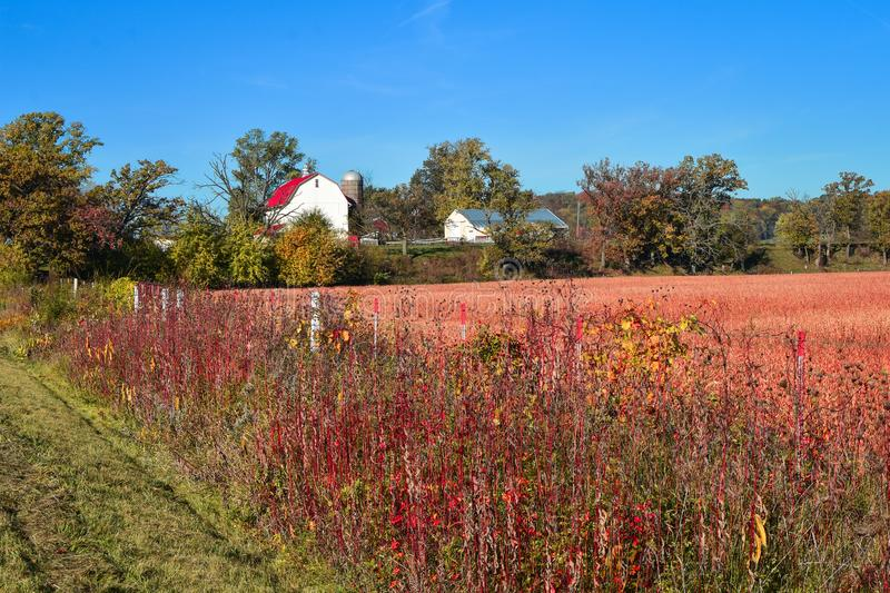 Beautiful Autumn Farm Scene with White Barn royalty free stock images