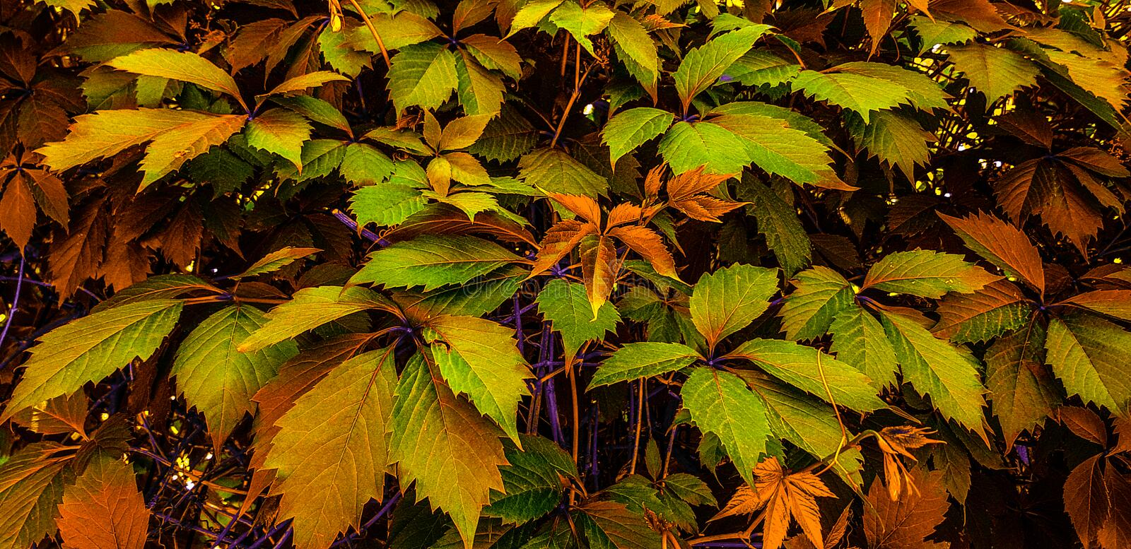 Very beautiful background of colorful leaves! stock photos