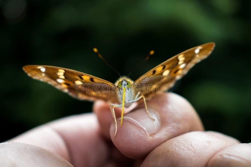 A very beautiful butterfly  sat on my fingers in my palm. A beautiful moment. wanderfull nature. Close up photography stock photo