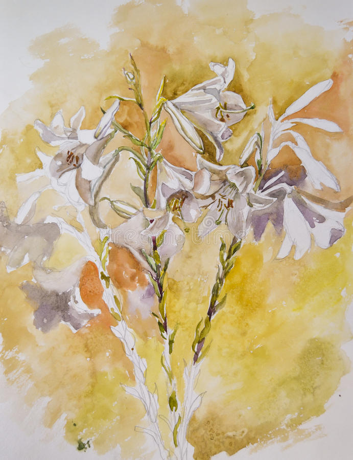 Very beautiful lily flowers painted with watercolor royalty free stock photography