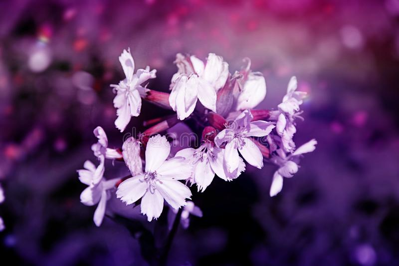 Beautiful flowers in unusual lighting stock image