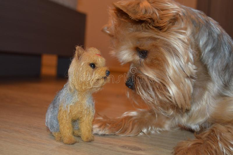 Very beautiful photo of a real dog and her doll royalty free stock photography