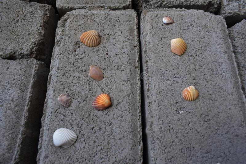 Scenic photo of the clam. Very beautiful scenic photo of the clam royalty free stock photo