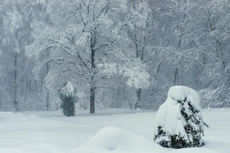 Very beautiful snow covered trees in the forest, winter stock image