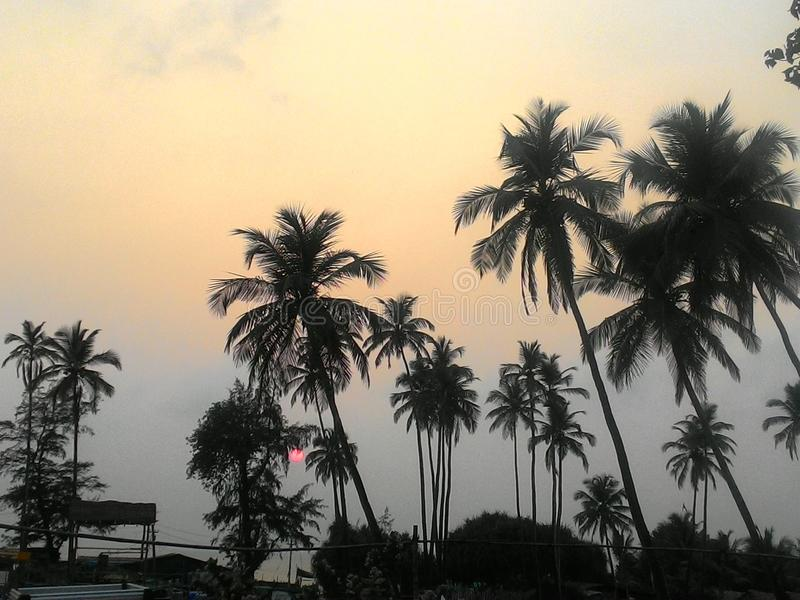 Very beautiful Sunset over the Indian Ocean, with Palm trees in Goa stock image