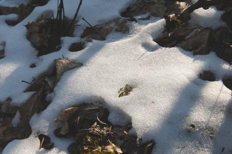 Very closeup detail of the snow and grass royalty free stock photos