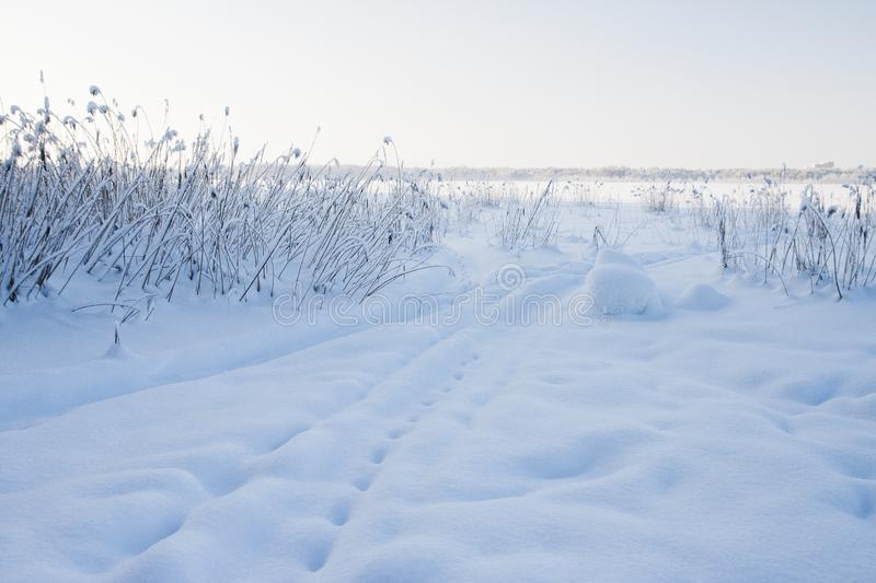 Very cold, even more colder. Lot of snow, winter mood and cold landscape. Bush is under the snow royalty free stock images