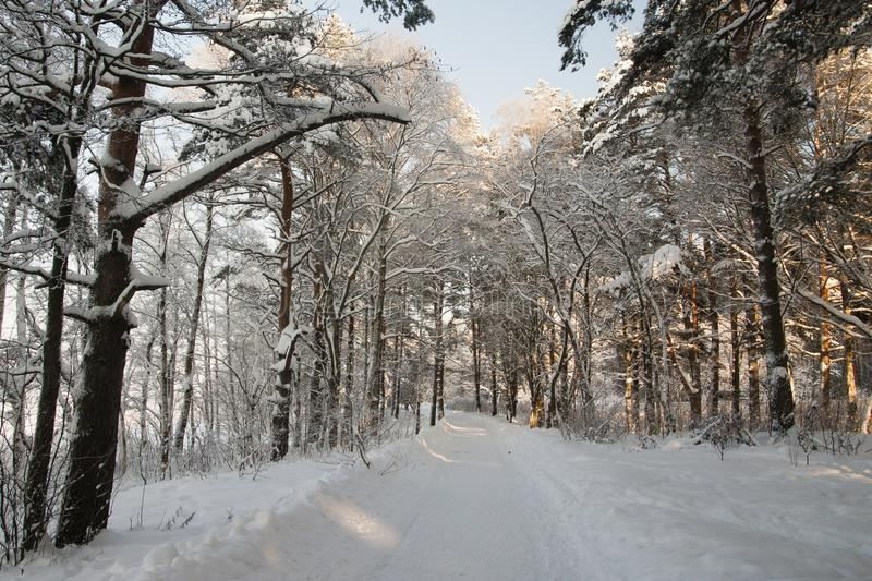 Very cold, even more colder. Lot of snow, winter mood and cold landscape. Bush is under the snow stock photo