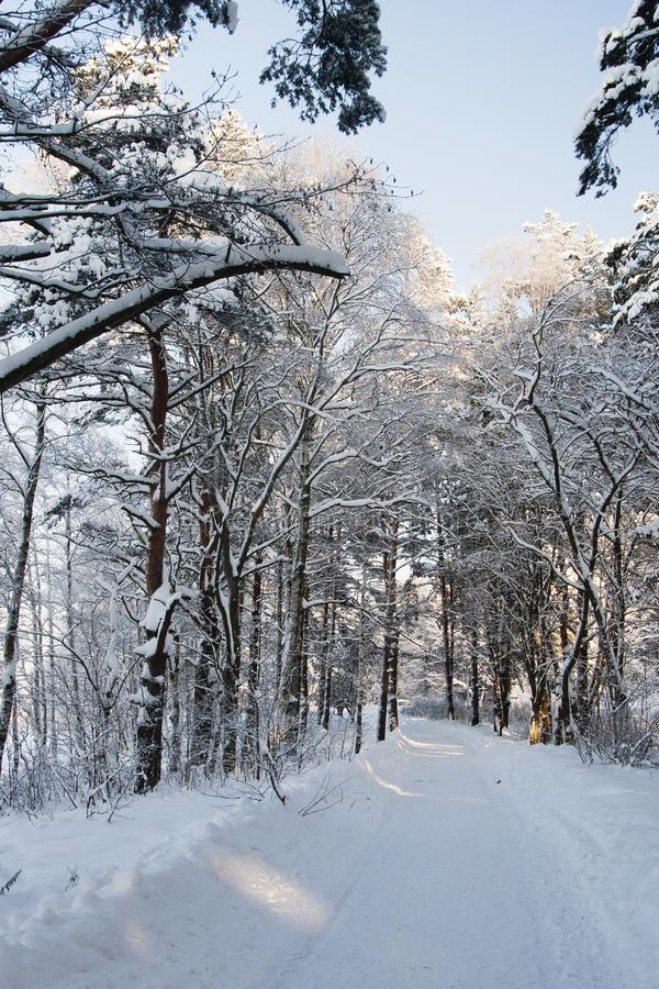 Very cold, even more colder. Lot of snow, winter mood and cold landscape. Bush is under the snow stock image