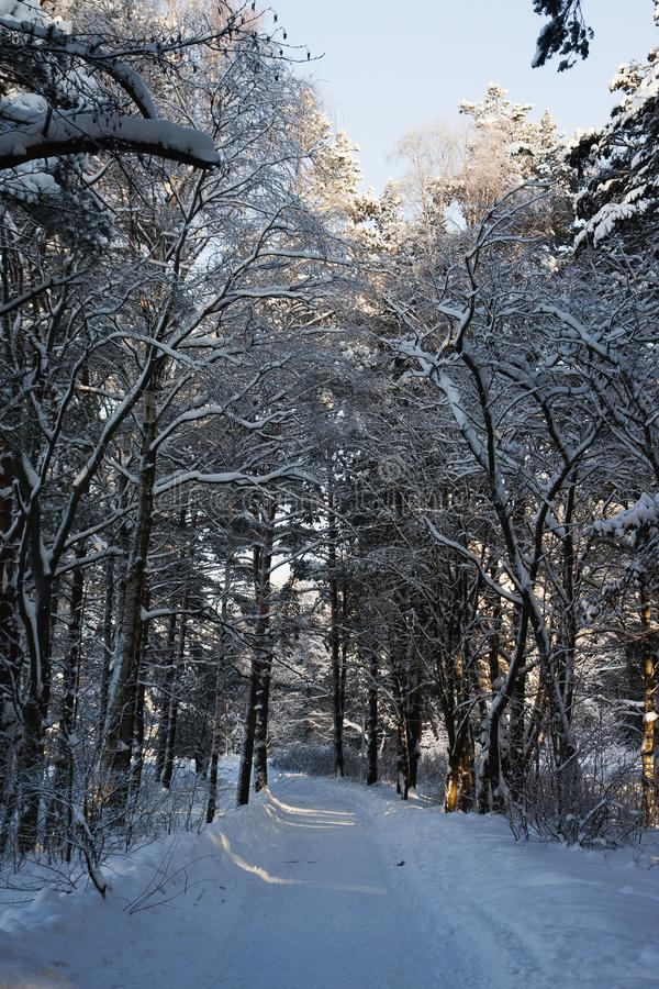 Very cold, even more colder. Lot of snow, winter mood and cold landscape. Bush is under the snow royalty free stock image