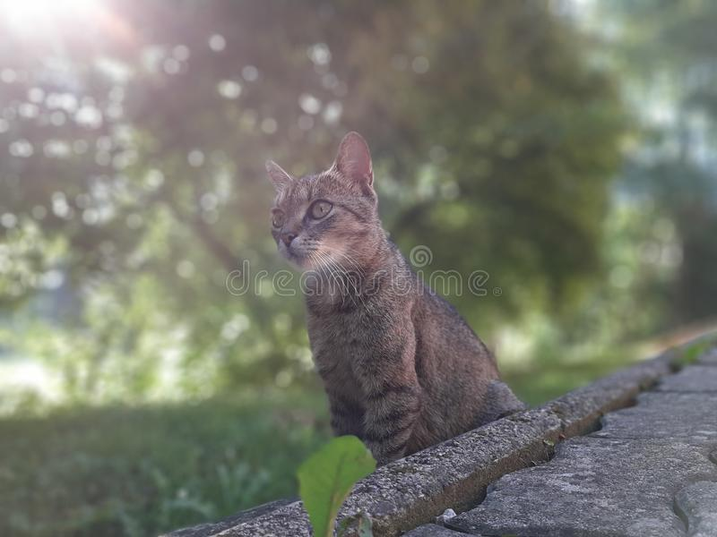 A very cute Cat stock images