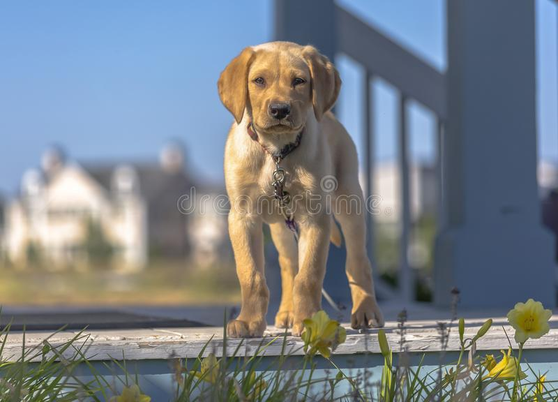 Puppy Porch Stock Images - Download 412 Royalty Free Photos
