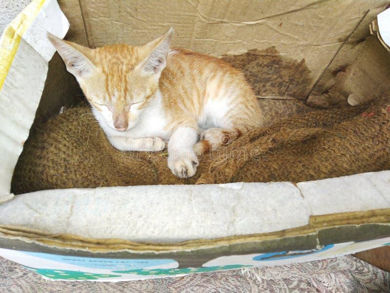 Very cute very small CAT sleep in box stock photos