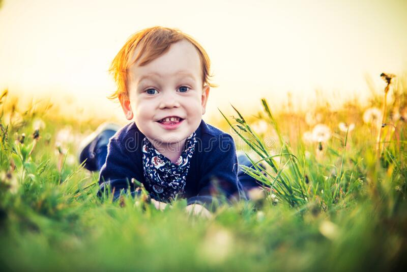 Very cute toddler smiling portrait in white dandelion meadow. Very cute toddler child boy portrait in white dandelion meadow while lying on, sunny sundown stock photo