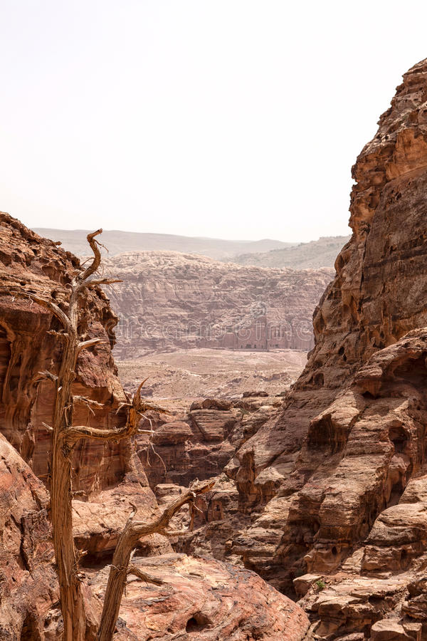 Very deep canyons with an dry tree in Petra, Jordan stock photography