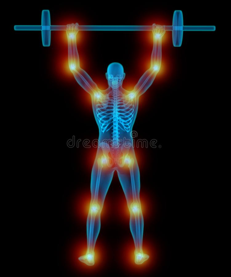 Very detailed and medically accurate 3D Illustration of a translucent man lifting weights stock illustration
