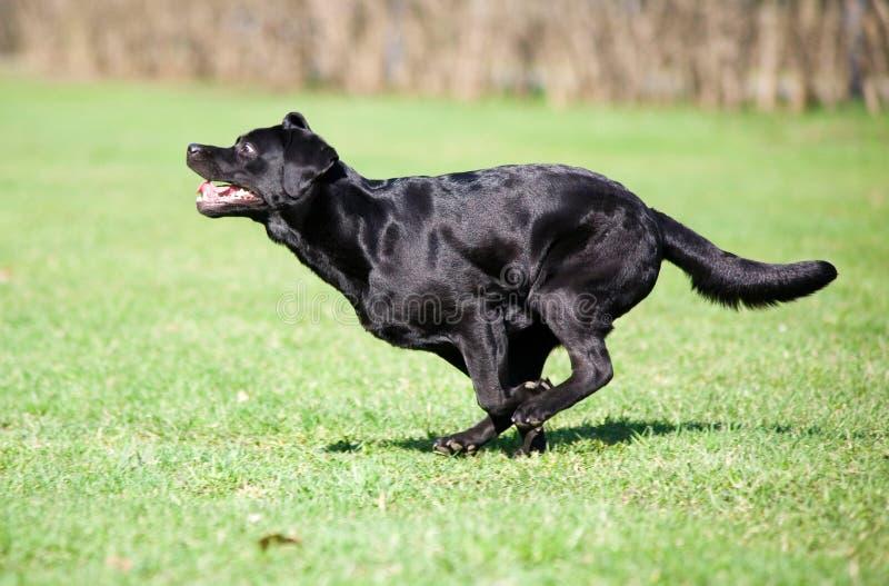 Very fast dog stock photo