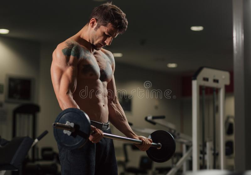 Very fit man in the gym doing biceps curl exercise. Very fit man with low body fat in the gym doing biceps curl exercise with a dumbbell stock photo