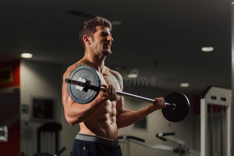 Very fit man in the gym doing biceps curl exercise. Very fit man with low body fat in the gym doing biceps curl exercise with a dumbbell royalty free stock photography