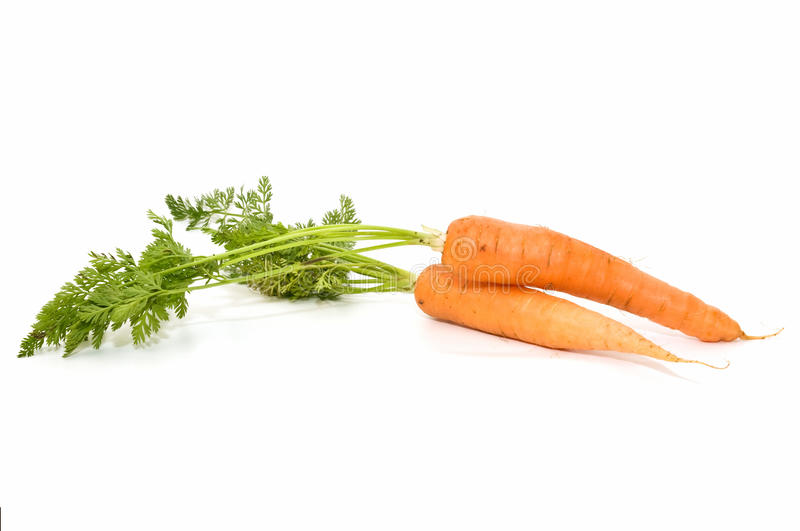 Download Very fresh carrots stock photo. Image of carrots, agriculture - 14457452