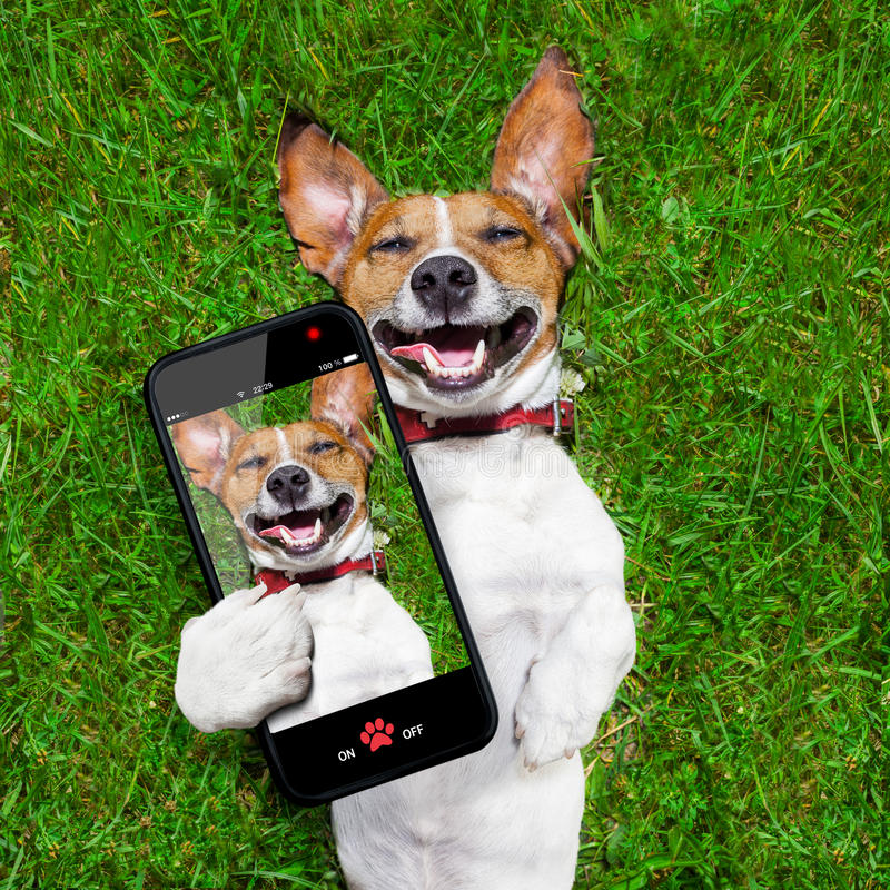 Very funny dog. Super funny face dog lying on back on green grass and laughing out loud taking a selfie