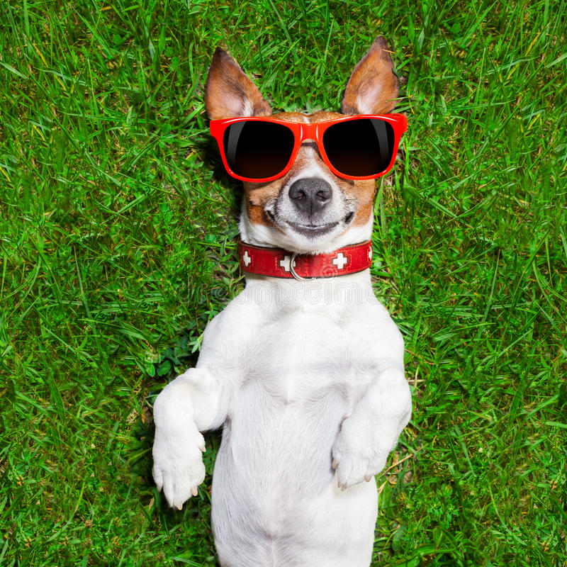 Very funny dog stock images