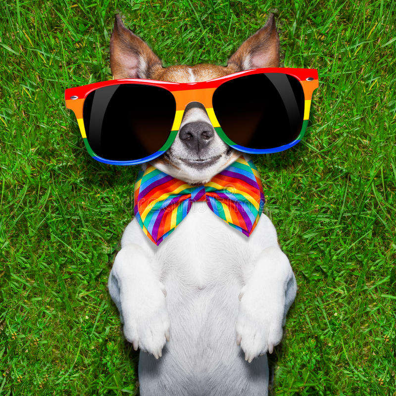 Very funny gay dog royalty free stock photo