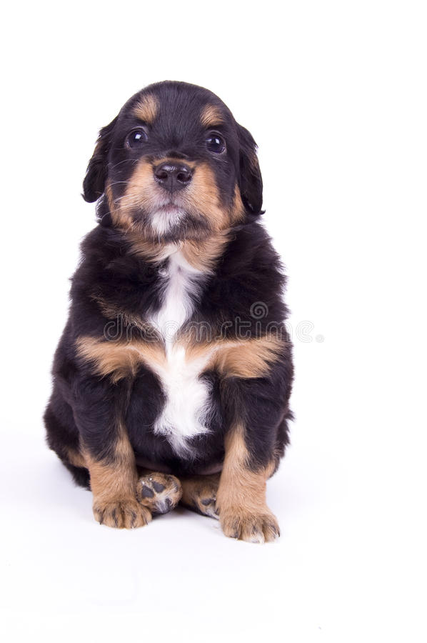 Download Very good dog stock photo. Image of frend, puppy, small - 12587704